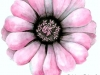 Pink daisy large