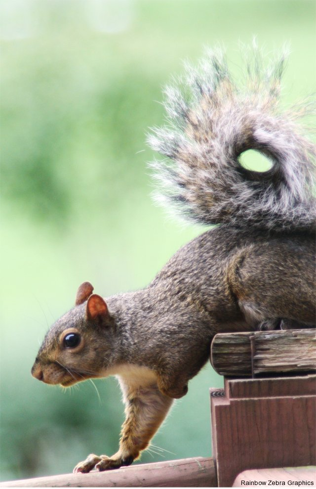 squirrel-on-deck